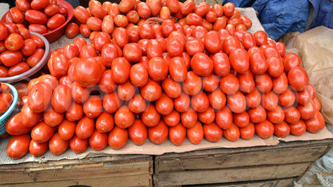 Tomatoes Prices